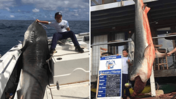 Trolls target 8-year-old boy for posing with 314lbs shark